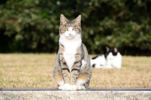 野原で座っている猫