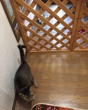 猫が諦めて降りている
