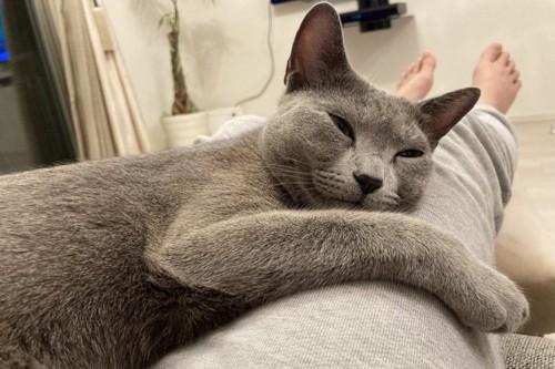 膝枕で寛ぐ猫