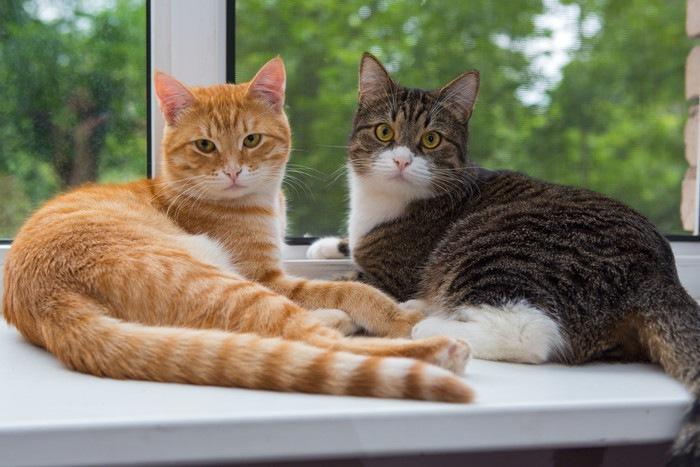 窓際に座っている二匹の猫