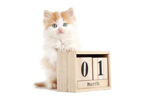 カレンダーと猫