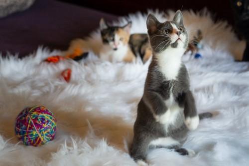 立ち上がって上を見つめる猫