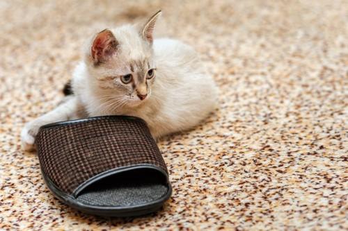 猫とスリッパ
