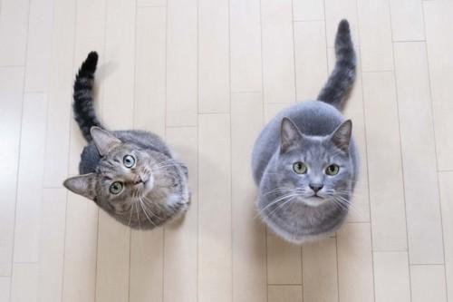 上を見上げる2匹の猫