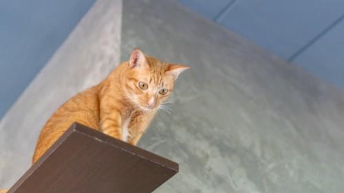 下を見る猫