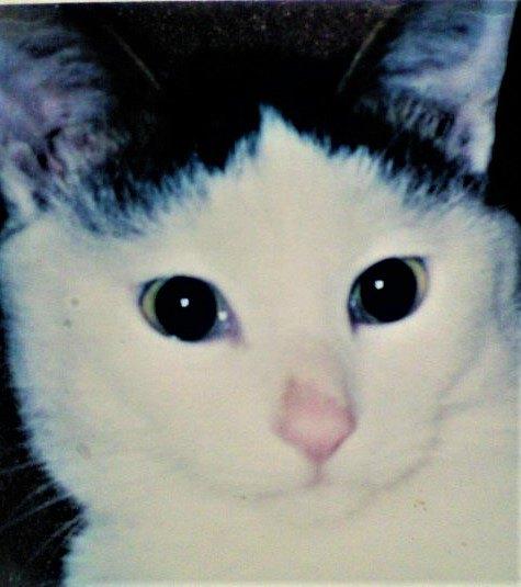 8年前に亡くなった愛猫