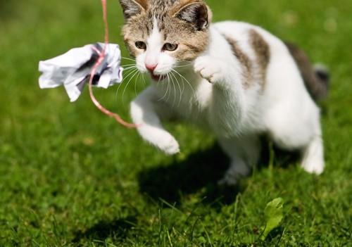 手作りおもちゃで外で遊ぶ猫