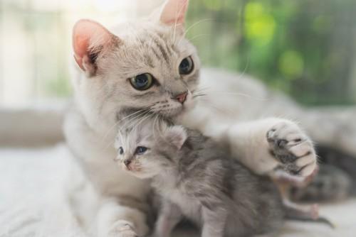 子猫を撫でている猫