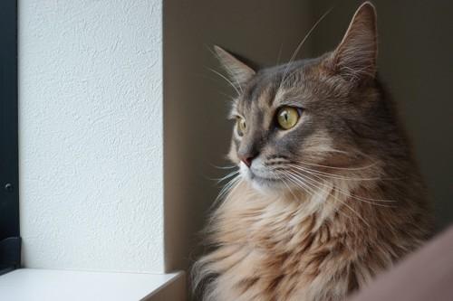 外を見て考えている猫