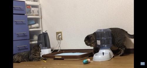 部屋にいる二匹の猫