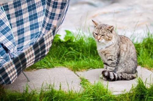 しっぽマフラーをする野良猫
