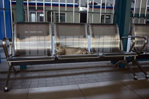 駅のベンチで寝る猫