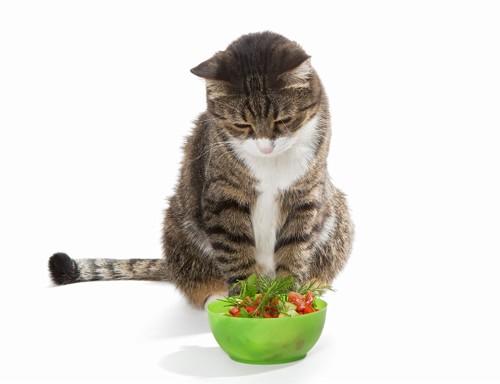 サラダを眺めている猫