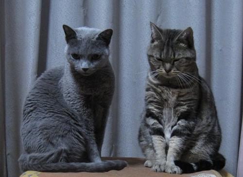 2匹の猫が正面を向いている
