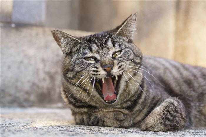 威嚇をしている猫