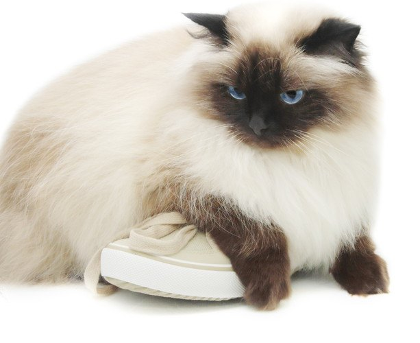菜々緒さんのかもしれない靴に乗っている猫