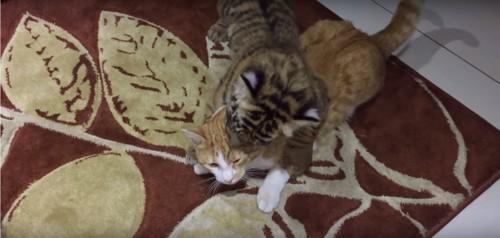 抱きつかれる猫