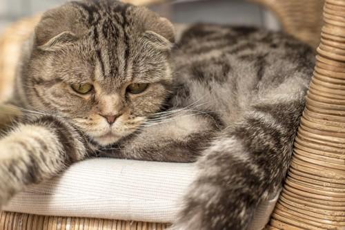 落ち込む猫