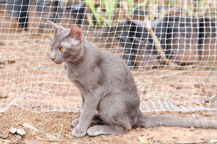 猫よけネット