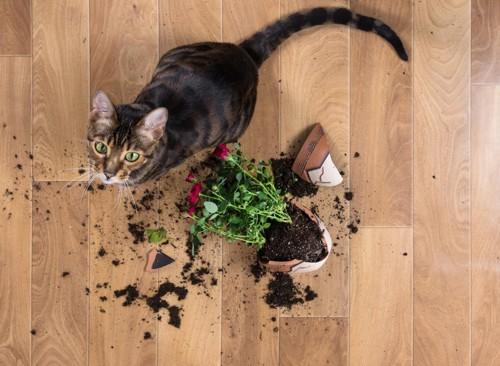 落ちた植木鉢の側にいる猫