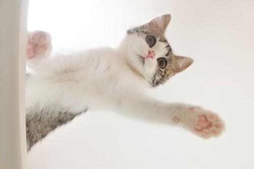 手を見せる猫