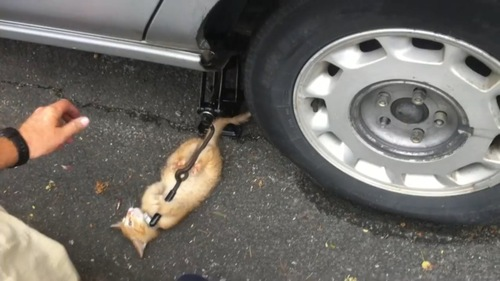 ジャッキを離さない猫