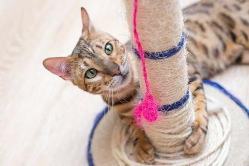 麻が巻かれたポールに抱きつく猫