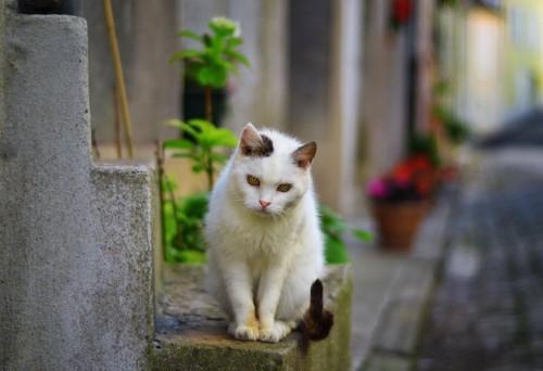 街中に座る野良猫