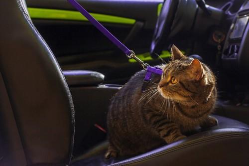 リードをつけて車の座席に座る猫