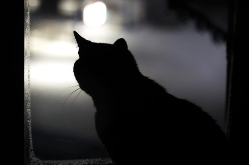 窓辺にいる猫のシルエット