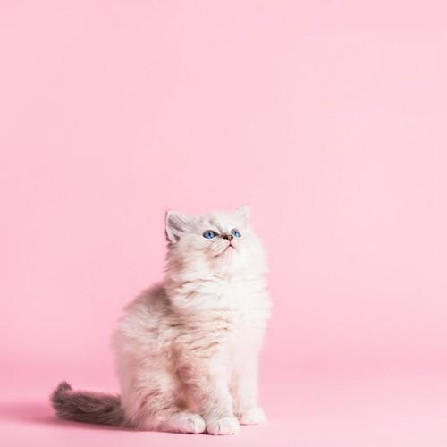 上を見上げてる猫