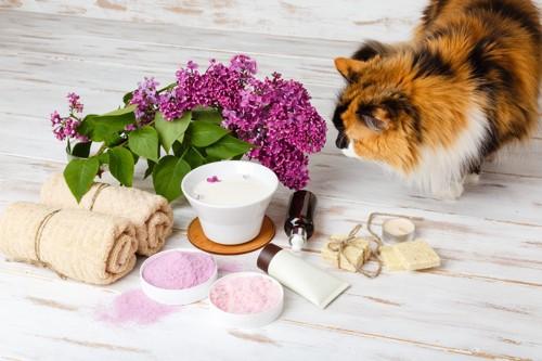 花や石鹸を嗅ぐ猫