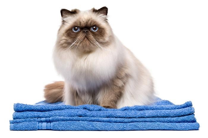 タオルの上の猫