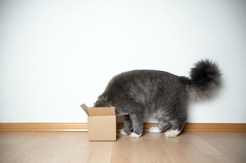 箱に顔を突っ込む猫