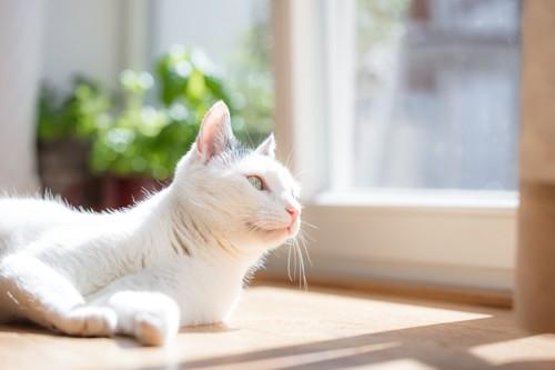 窓際で寝そべっている猫