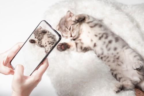 寝ている子猫の写メをとる人