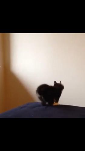 壁に向かって構える猫