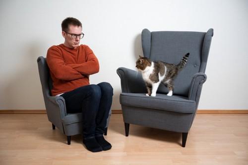 不機嫌そうな男性と猫