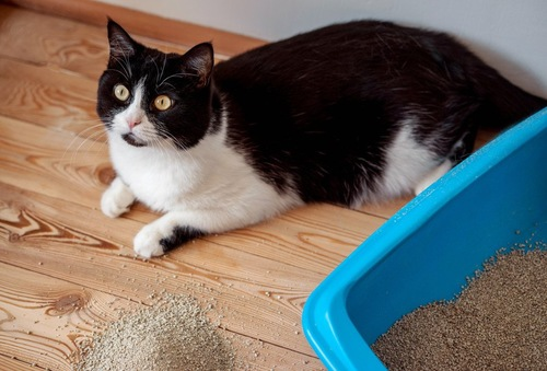 猫トイレの横にいる猫