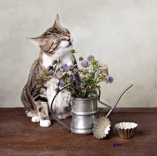 花とくしゃみする猫