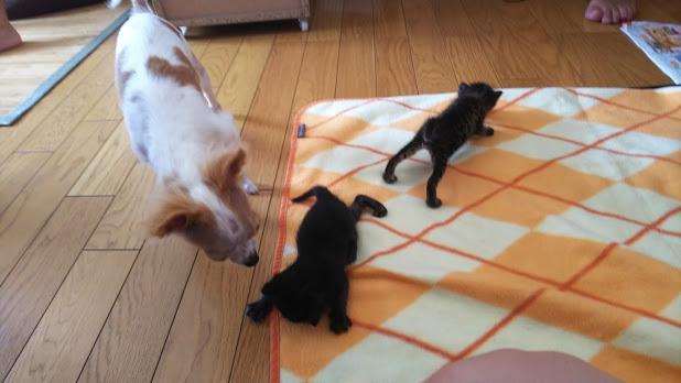 子猫をかわいがる先輩犬