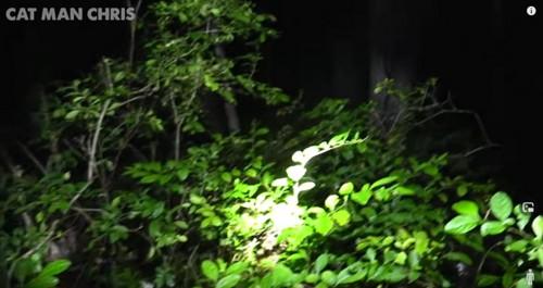夜の茂みの中