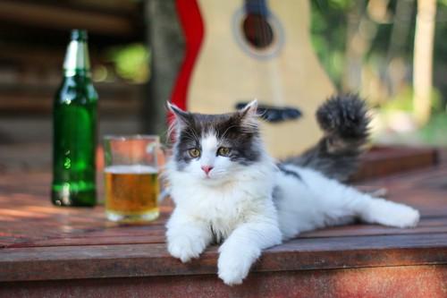 お酒の置かれたテーブルでくつろぐ猫