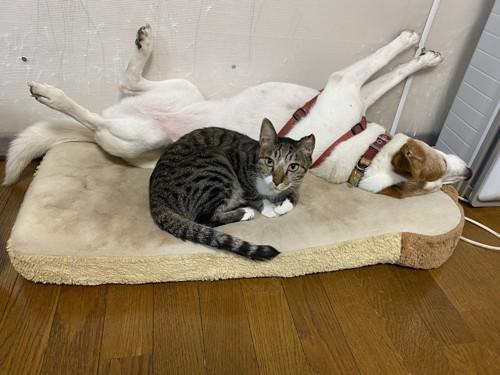 犬と一緒にいる猫
