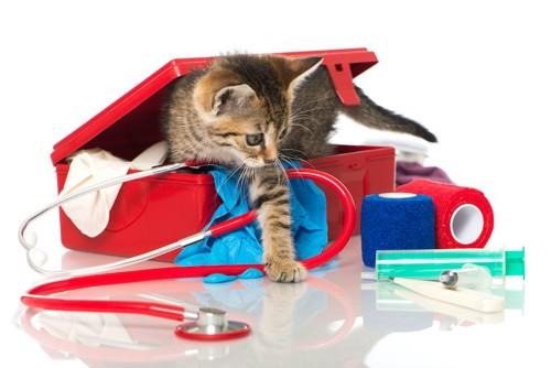 救急箱から出てくる子猫