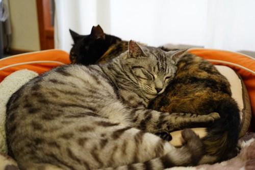 丸まって寝る猫達