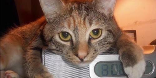 ラジオ時計の上に猫