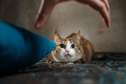 猫を捕まえようとする手