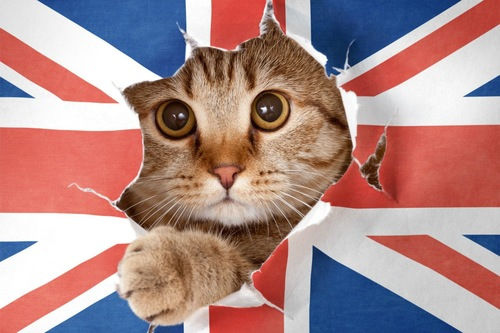 ユニオンジャックから飛び出す猫