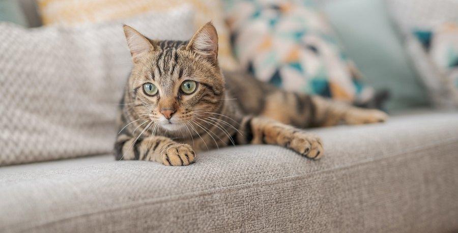 ソファーで寛ぐ猫